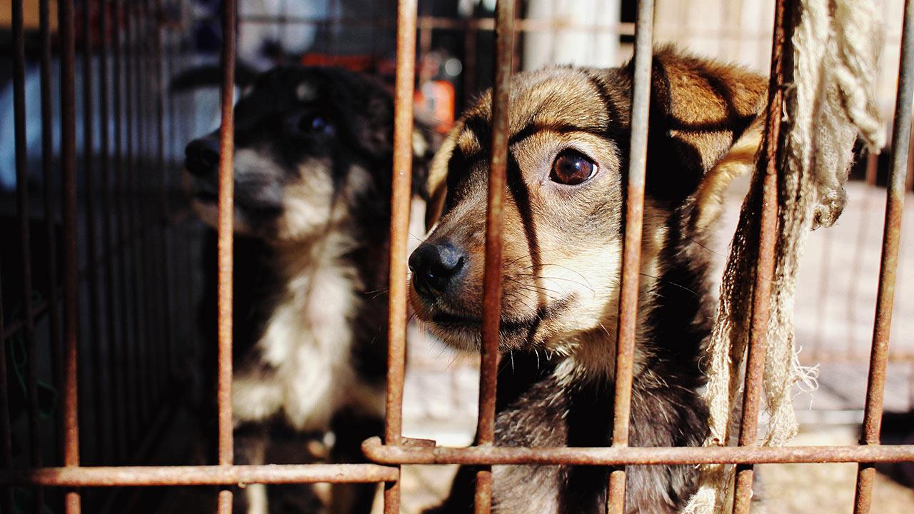 Intelligences Factory - Reservoir Dogs - Chiens en cage